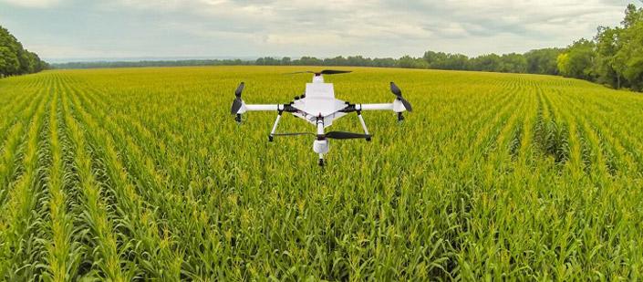 Impulsar al sector agrario: dron sobrevolando cultivos