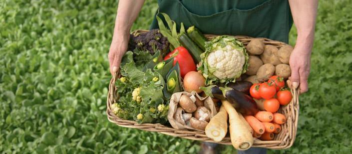 producción de alimentos sostenibles
