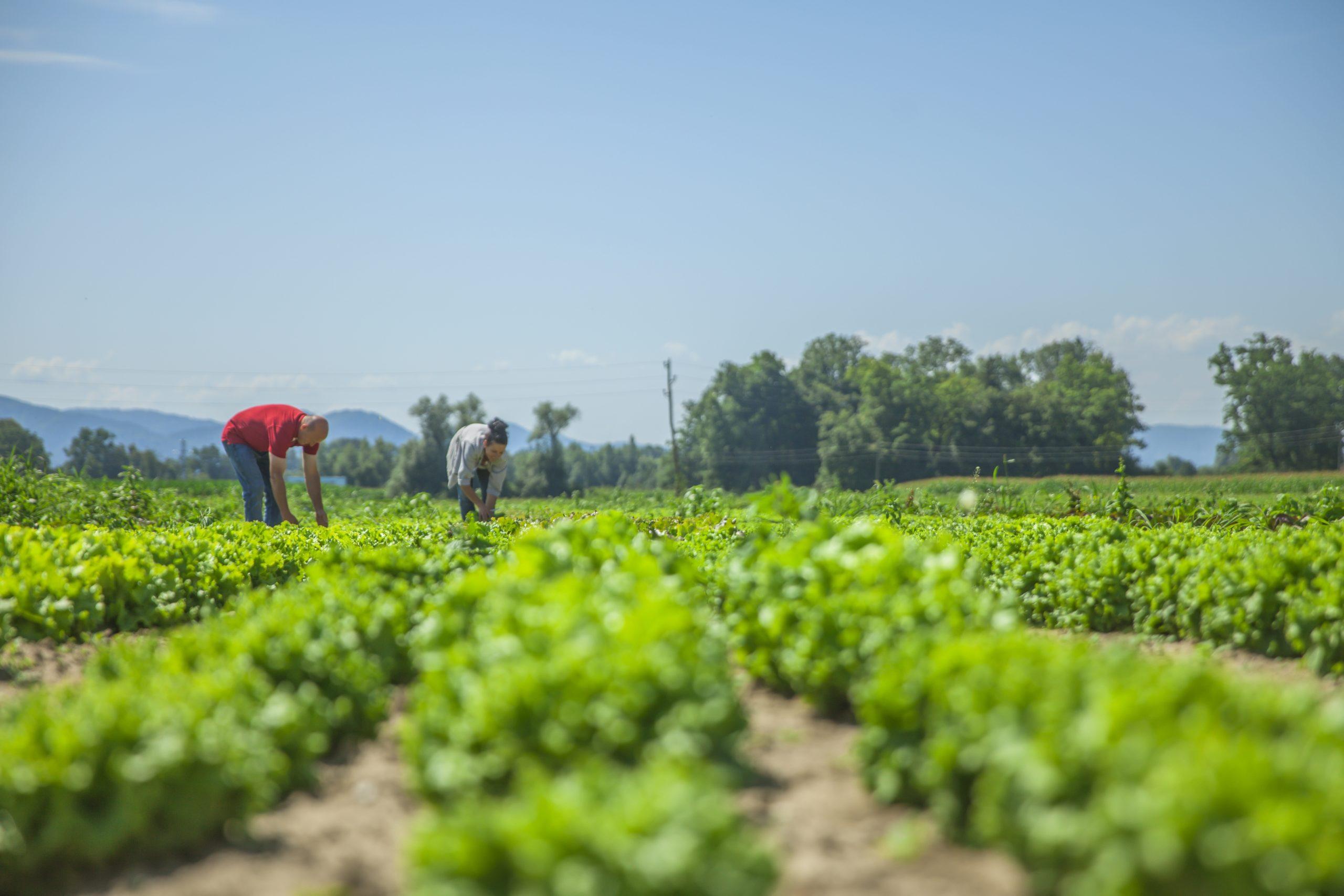 La FAO toma a Fundación Ingenio como referente en materia de innovación y buenas prácticas agrícolas